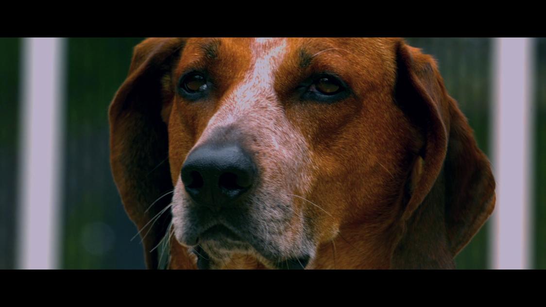 challenge a drug dog